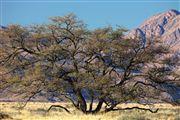 Naukluft National Park, Namibia, Namibia