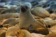 Cape Cross Seal Reserve, Namibia, Namibia