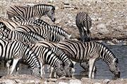 Etosha, Namibia, Namibia