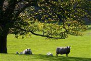 Isle of Mull, Isle of Mull, Reino Unido