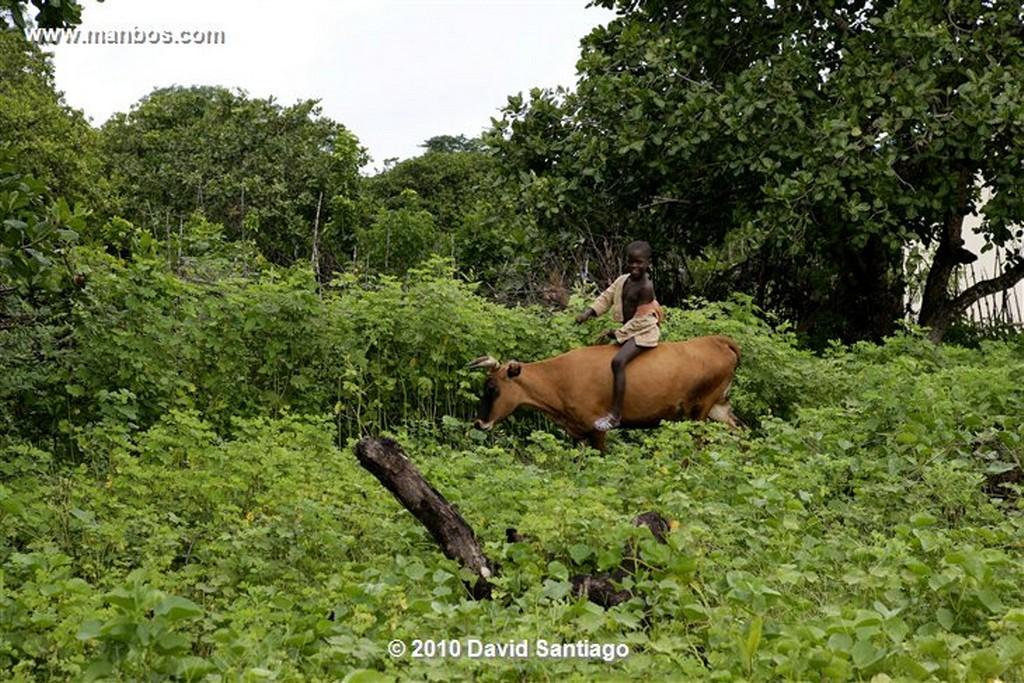 Islas Bijagos  Buitre de Las Palmeras P n Orango Guinea Bissau  Islas Bijagos