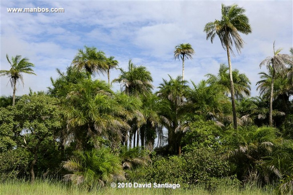 Islas Bijagos  Camino A la Laguna de Anor P n Orango Poilao Bijagos Guinea Bissau  Islas Bijagos
