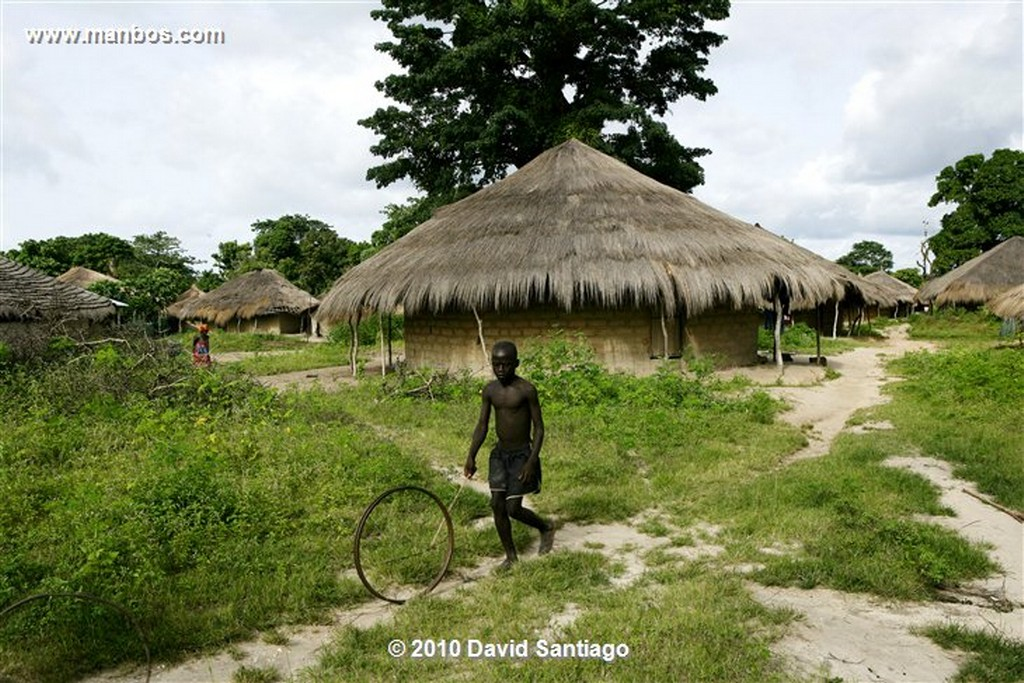 Islas Bijagos  Flamenco P n Orango Guinea Bissau  Islas Bijagos