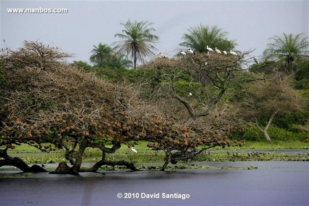 Islas Bijagos  Laguna de Anor P n Orango Poilao Bijagos Guinea Bissau  Islas Bijagos