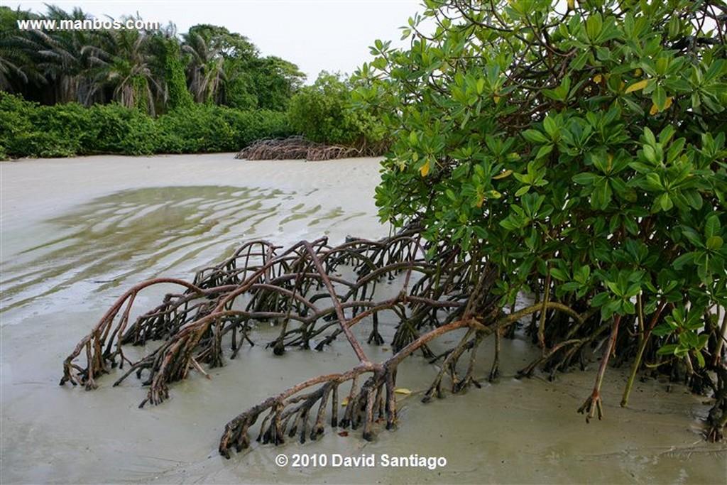 Islas Bijagos  Poilao Parque Nacional Joao Vieira Poilao Bijagos Guinea Bissau  Islas Bijagos