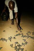 Parque Nacional Islas de Orango , Islas Bijagos , Guinea Bissau
