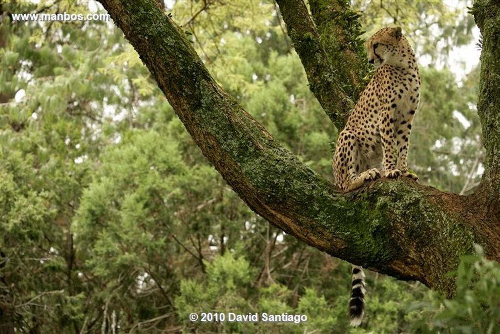 Ol Pajeta Ol Pajeta Wildlife Conservancy Kenia  Ol Pajeta