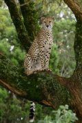 Photo of Masai Mara, Masai Mara , Kenya - Leopardo
