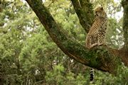 Photo of Masai Mara, Kenya - Masai Mara