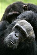 Photo of Ol Pajeta, Ol Pajeta Wildlife Conservancy , Kenya - Ol Pajeta Wildlife Conservancy Kenia