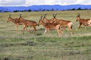 Ol Pajeta Wildlife Conservancy , Ol Pajeta, Kenia
