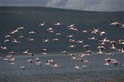 Lago Nakuru , Lago Nakuru, Kenia