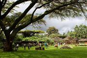 Camara Canon EOS 500D Monte Kenia Kenia  Kenia Salvaje MONTE KENIA Foto: 20303