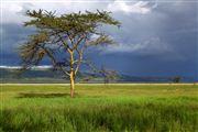 Lago Nakuru, Lago Nakuru, Kenia