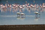 Lago Elementaita, Lago Elementaita, Kenia