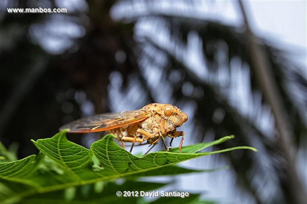 Taman Negara National Park Kelantan - terengganu y pahang