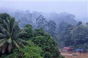 Taman Negara National Park, Taman Negara National Park, Malasia