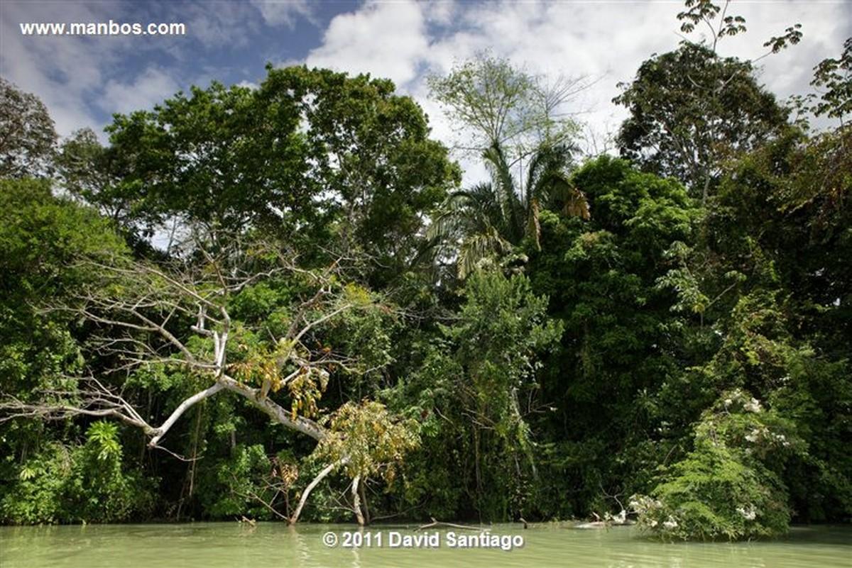 Panama Bamboa Rain Forest Panama
