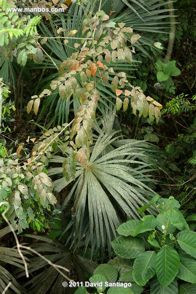 Panama Soberania National Park Panama