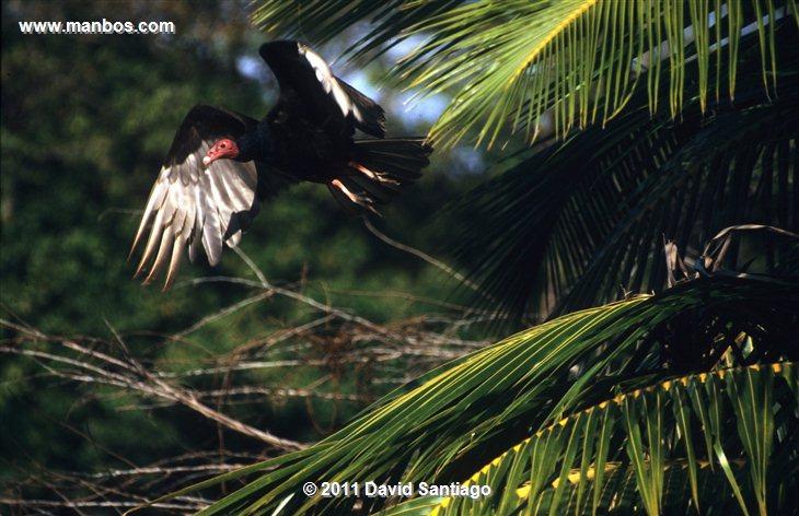 Panama Darien National Park Garceta Nivea Egretta Thula Panama
