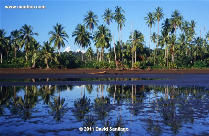 Panama La Amistad Biosphere Reserve Panama