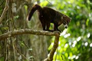 Soberania National Park, Panama, Panama