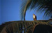 Coiba National Park, Panama, Panama