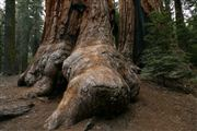 Sequoia National Park , Sequoia National Park , Estados Unidos