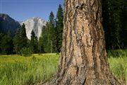 Yosemite , Yosemite , Estados Unidos