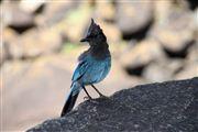 Jay Steller, Yosemite , Estados Unidos