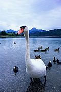 Photo of Weissensee Lake, Germany - Lago Weissensee Baviera