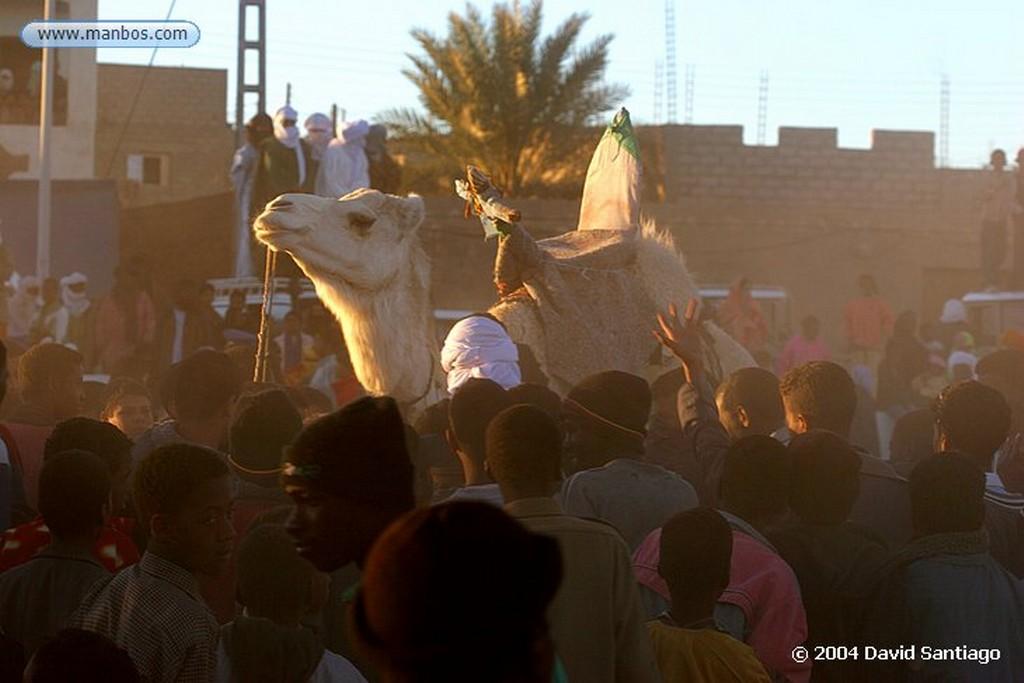Tamanrasset Detalle de Camello en  Tamanrasset - Argelia Argelia