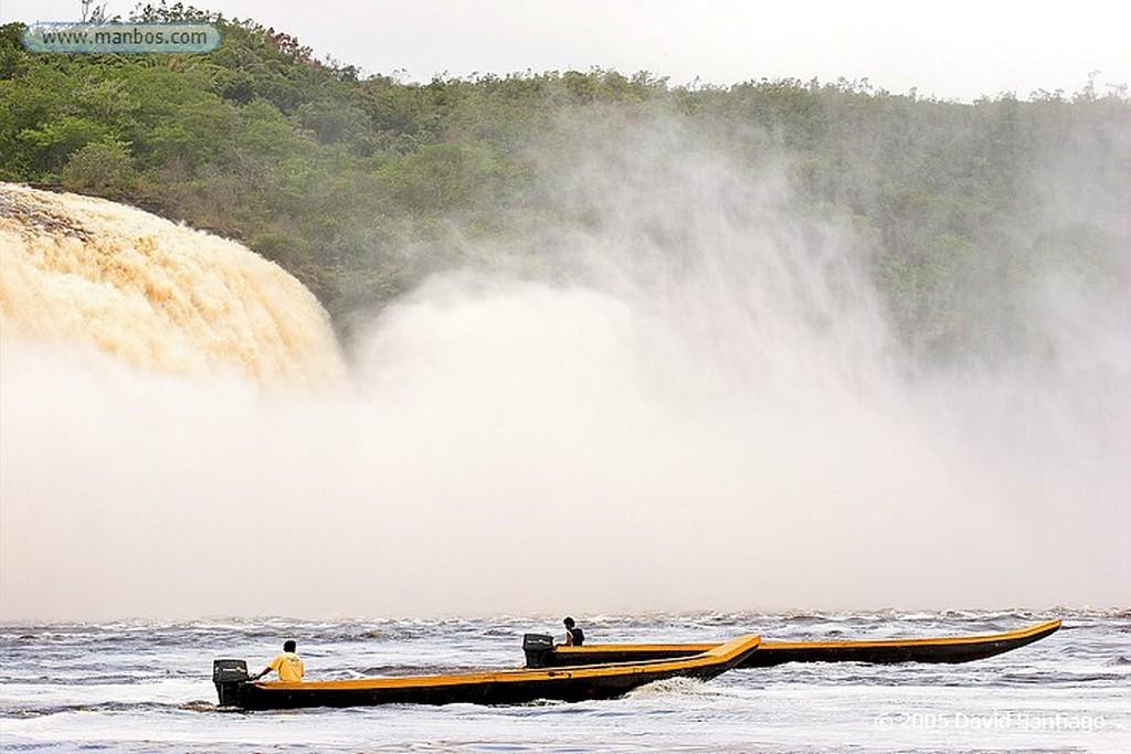 Parque Nacional Canaima Flor Bolivar