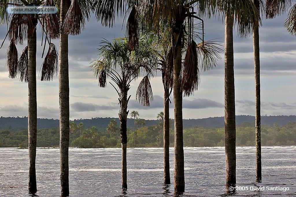 Parque Nacional Canaima Aracnido Bolivar