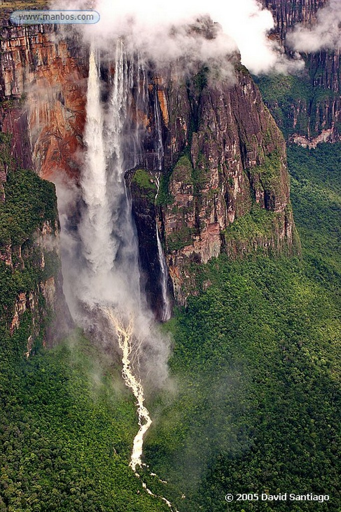 Parque Nacional Canaima Flores en Tepui Roraima Bolivar