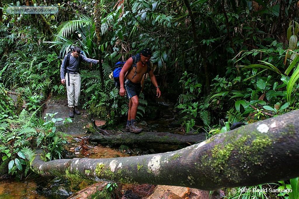 Parque Nacional Canaima Subida al Roraima Bolivar