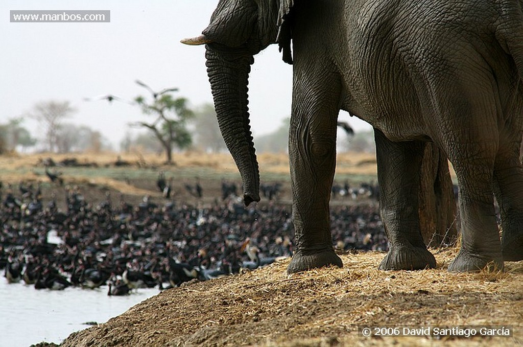 Parque Nacional de Zakouma Elefante africano Zakouma