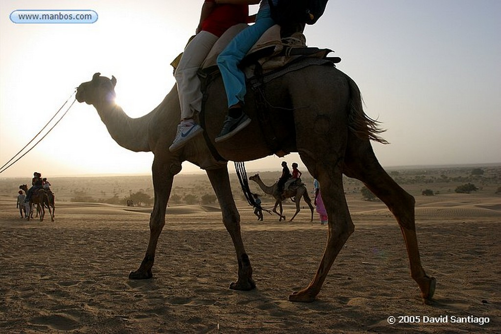 Khuri Ginete de Camellos en Khuri Khuri