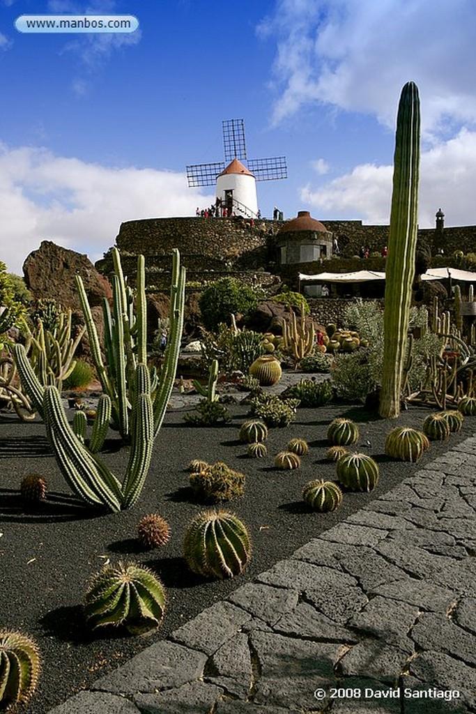 Lanzarote Mammillaria compressa Canarias