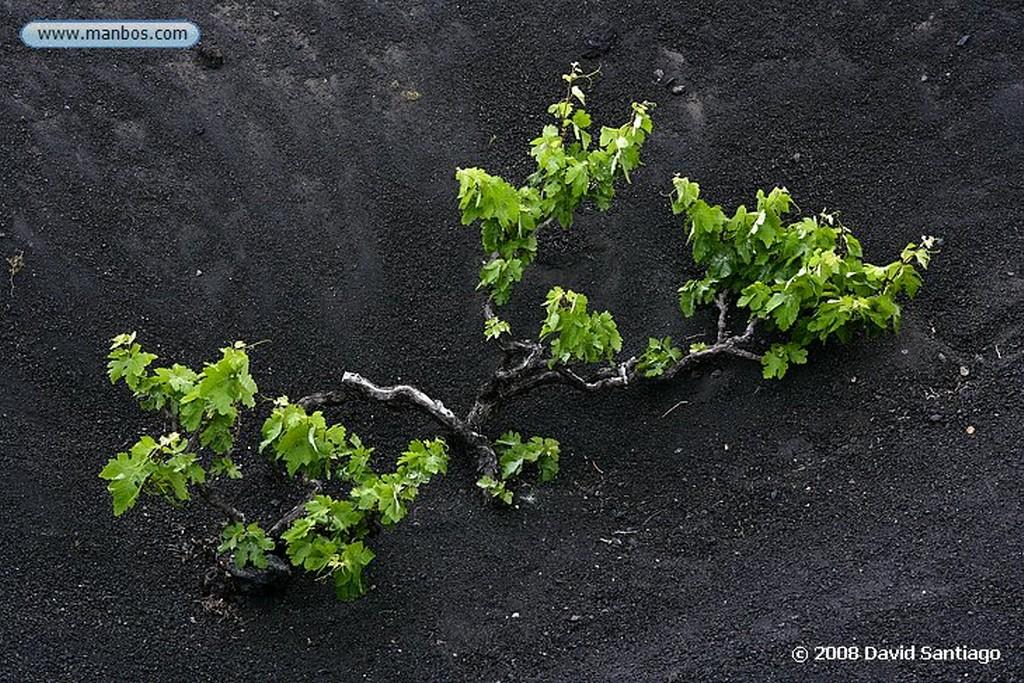 Lanzarote La Geria Canarias