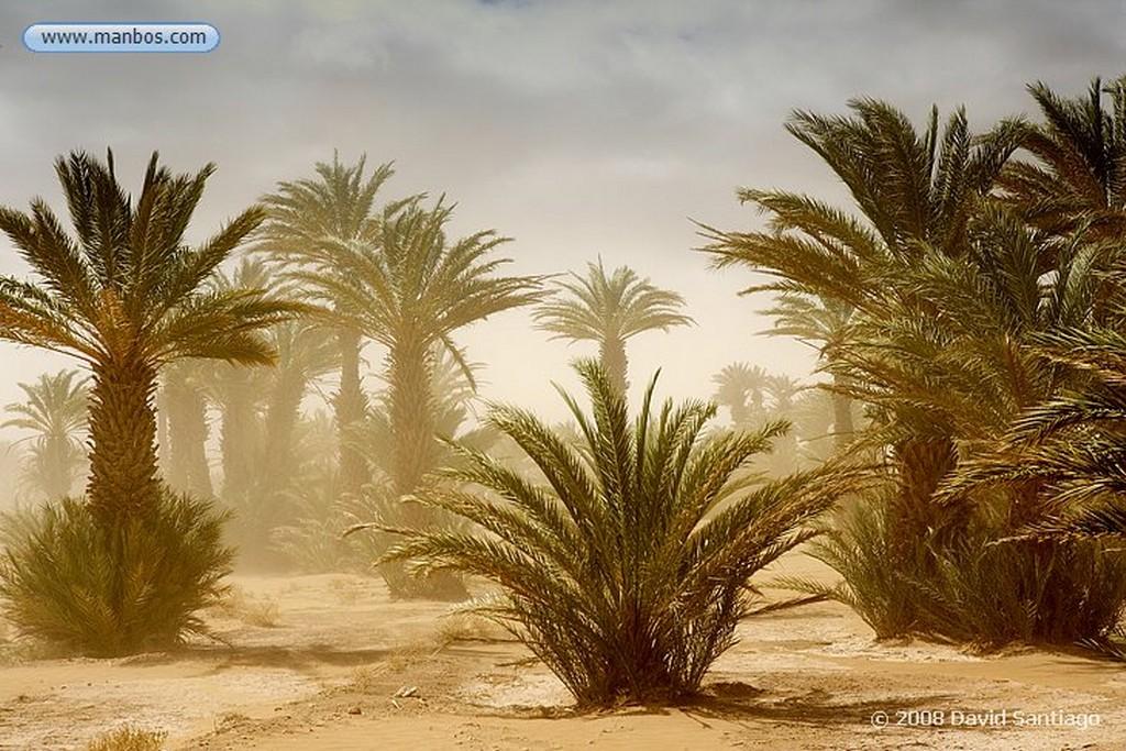 Tamegroute Tormenta de Arena en el Palmeral de Tamegroute Marruecos