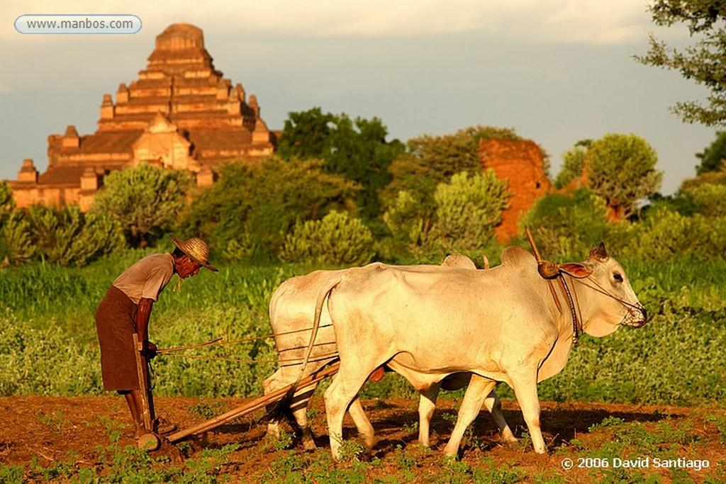 Pagan Pagodas y estupas en Pagan Pagan