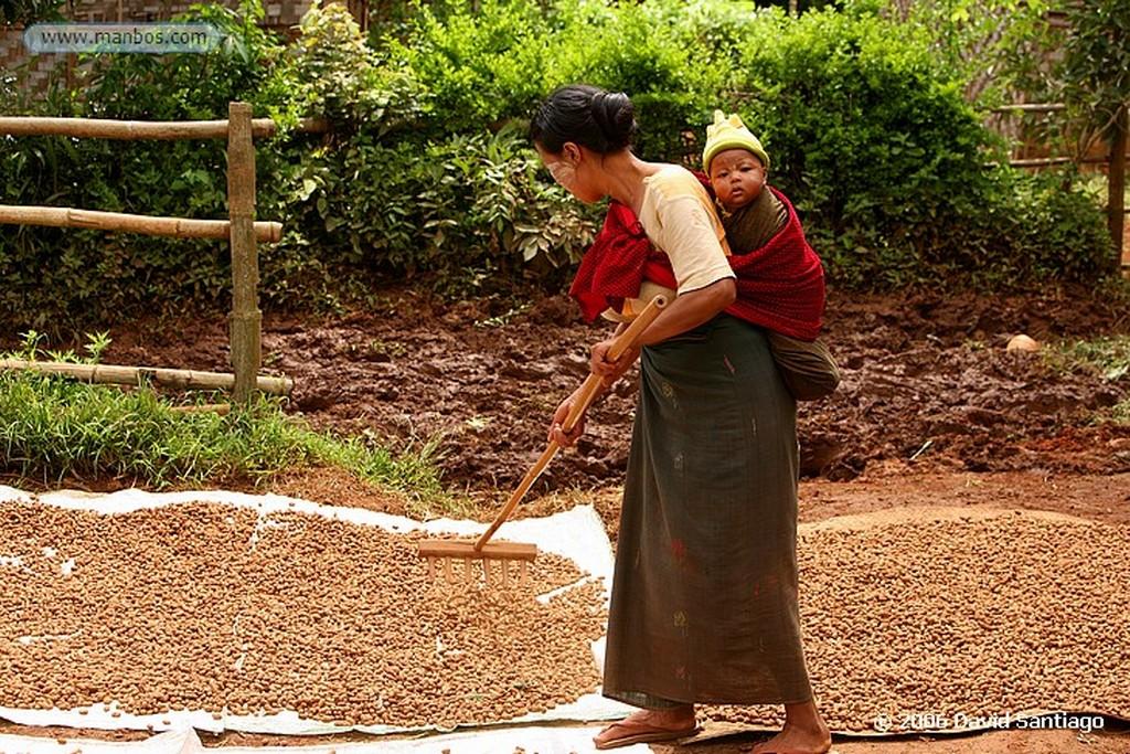 Kalaw Agricultor en Kalow Myanmar Kalaw