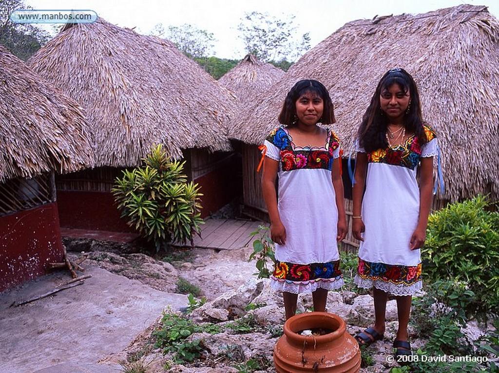 Riviera Maya Loro cabeciamarillo - Yucatán - México Yucatan