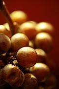 Foto de La Rioja, Argentina - Vino Pinot Noir en el Museo del Vino de La Rioja Bodega Graffigna