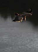 Parque Nacional de Monfrague, Parque Nacional de Monfrague, España