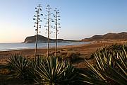 Ensenada de los Genoveses, Cabo de Gata, España