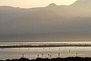 Salinas del Cabo de Gata, Cabo de Gata, España