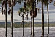 Laguna de Canaima, Parque Nacional Canaima, Venezuela