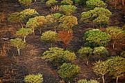 Parque Nacional de Zakouma, Parque Nacional de Zakouma, Chad